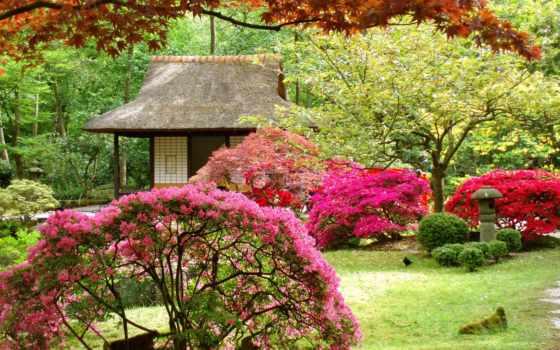 кустарники, цветущие, деревья