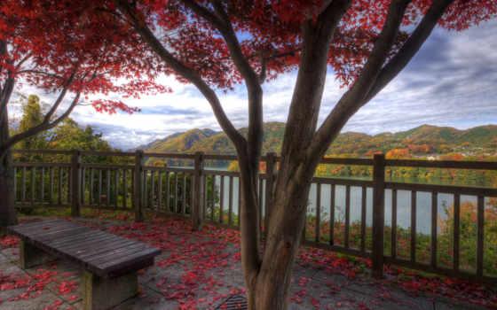 осень, природа, красавица