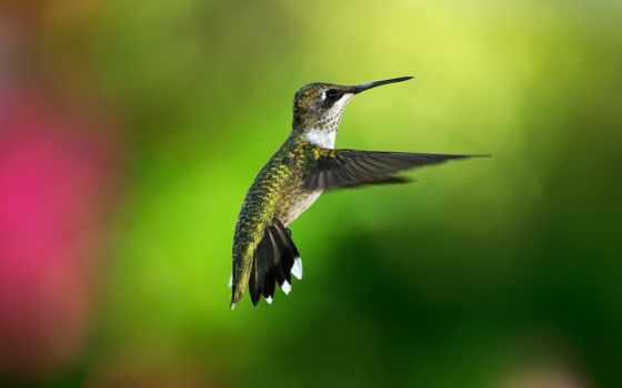 колибри, птица, iphone, птицы, birds, colibri, боке, bokeh,