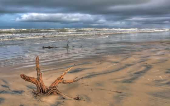 driftwood, страница, закат, earth, пляж, fundal, ребенок, ро,