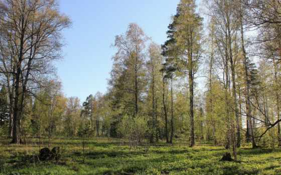 природа, wood, shawn, tapety, hintergrundbild, лес, warren, сам,