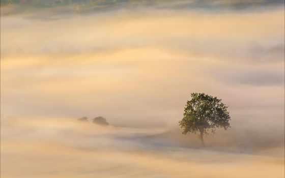 пыль, песок, пустыня, ветер, silver, grand, duness, дерево, вечер,