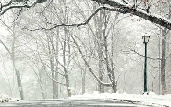 снег, trees, winter, дорога, landscape, дождем, wet, года, лес, красавица,
