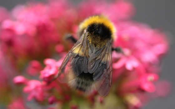 iphone, макро, obrázky, pictures, пчелка, pozadia, насекомые,
