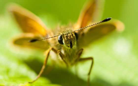 объектив, apexel, макро, lente, природа, насекомое, фото, wide, miscellaneous,