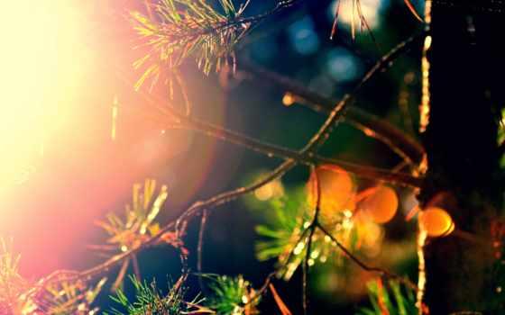 дерево, gameplay, cleanest,