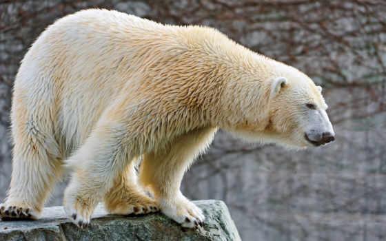 медведь, white Фон № 87120 разрешение 2560x1440