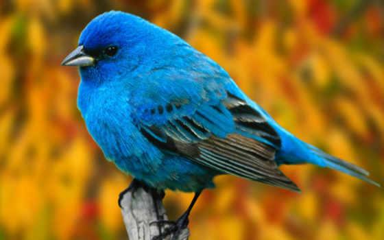 birds, twitter