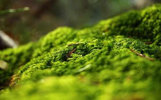качестве, лес, весна