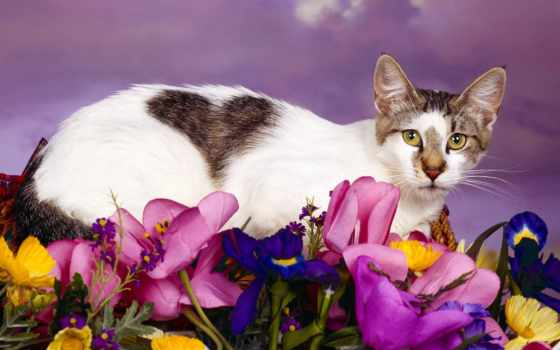 сердце, cats, черви, кот, more, creatures, об, kitty,