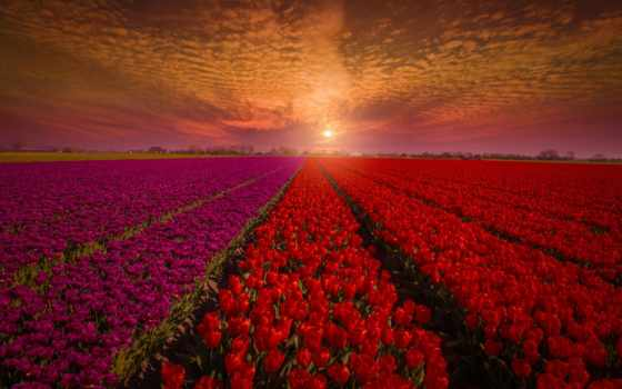 pin, red, tulips, flowers, тюльпаны, небо, pinterest,