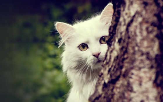 кошки, экран, белый,