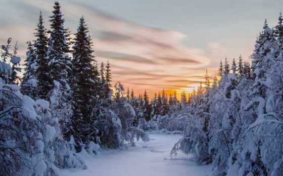 winter, free, pro, ёль, семейства, сосновых, года, fir, дерево,