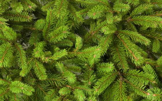 branch, елка, еловый, elochnyi, previe, decoration, toy, new, камин, праздник, christmas