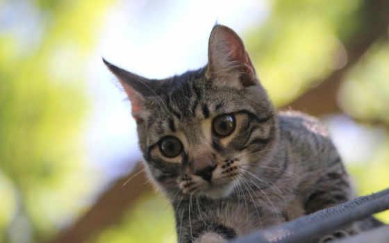 смотрит, котенок