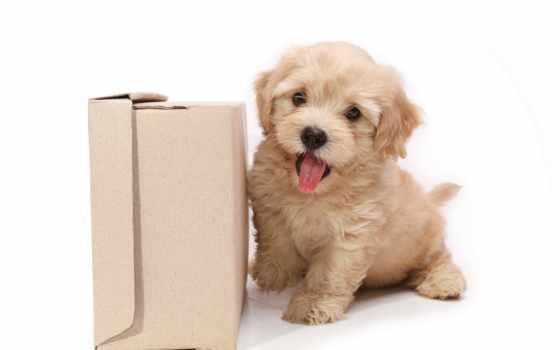 очень, хочу, собака