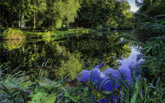 landscape, пруд, растения