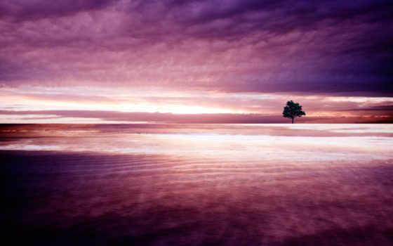 природа, purple, facebook