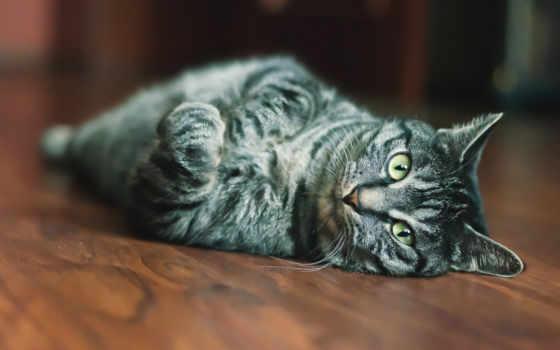 кот, пол, desktop, фото, категория, animals, are, served,