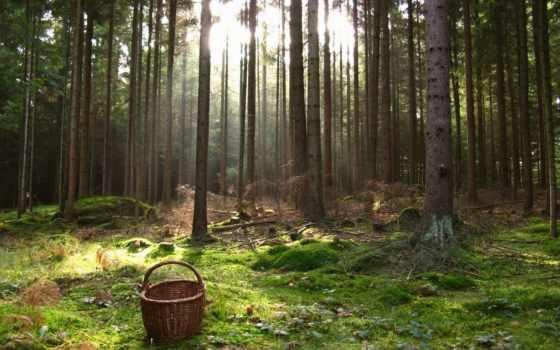 лесу, lose, заблудились, заблудилась, лес, июл, за, если, хорошо,
