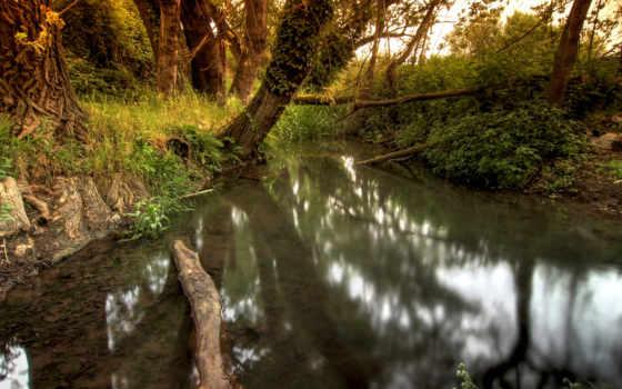 ручей, trees, природа, весна, тихий, лесу, лес,