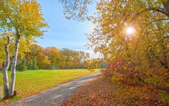 свет, trees, rays, осень, природа, park, sun, небо, листва, леса,