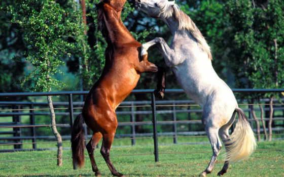 horse, horses
