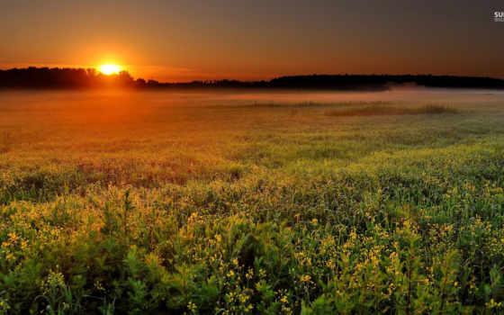 поле, природа, landscape