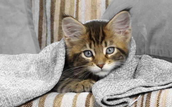 котенок, полосатый, uov