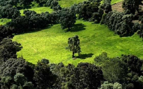 поляна, лесная, margin, газоны, макро, банка,