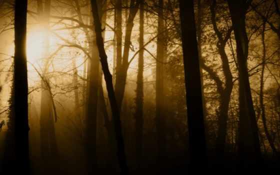 лес, свет, trees
