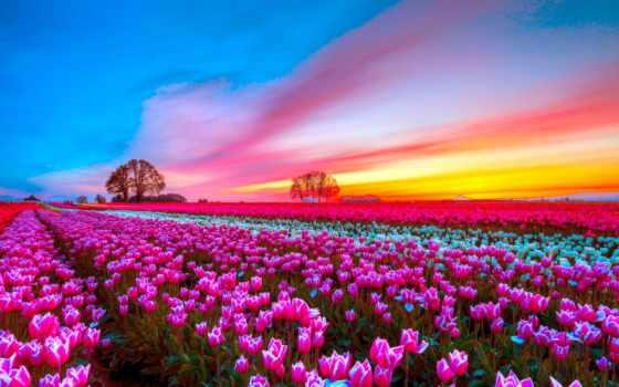 вечер, хороший, pictures, images, flowers, графика, afternoon, photos,