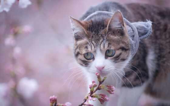 кот, цветы, pulpit, cats, random,