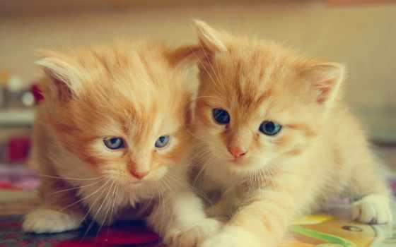 вконтакте, пара, кот, котята, кошки, именем, картинка, страница,