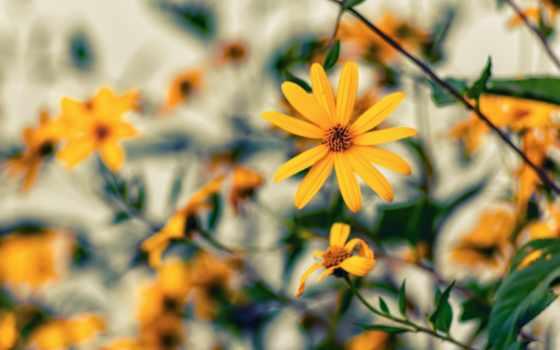 iphone, yellow, macbook, desktop, цветы, pro, free,