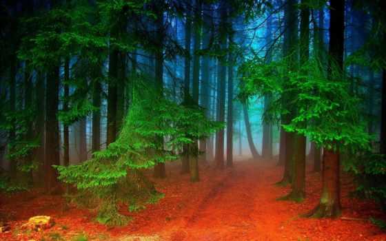 коллекция, лес, los, para, яndex, paisajes, alemania,