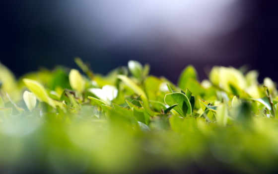 зелёный, макро, листва, фоны, грибы, summer, pinterest, картинка,