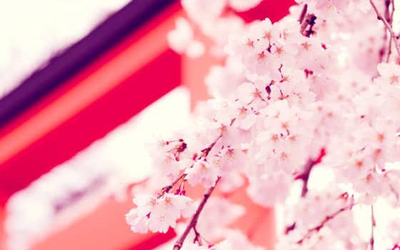 cvety, россия, фрязино, снять, розовые, волкова, anastasia, страницу, природа,