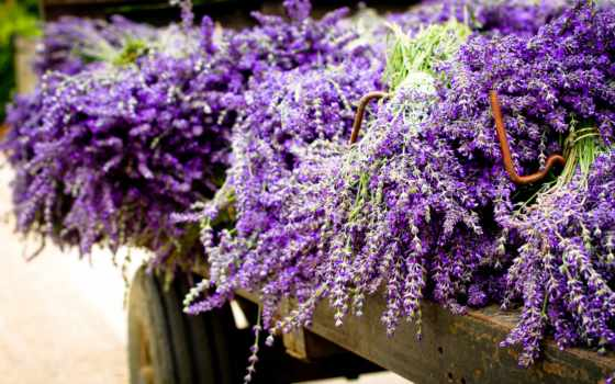 cvety, пл, purple, экран, букет, весь, тюльпан, lavender