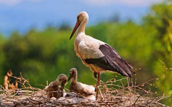 stork, птица, animal, же, fate