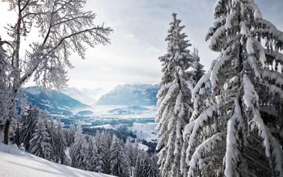 заснеженный, лес, winter, снег, ela, елка, high, гора