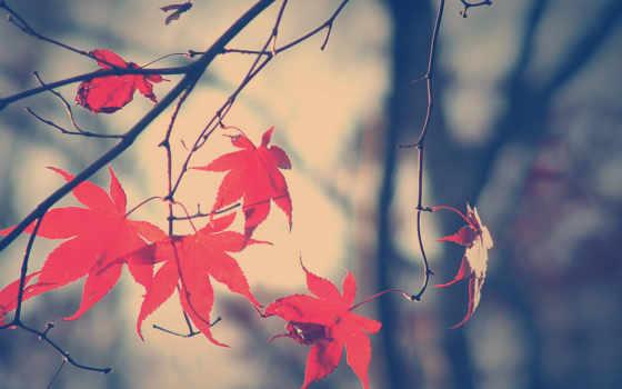 листья, осень Фон № 32187 разрешение 1920x1080