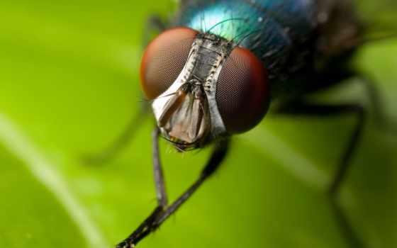 мухи, glaza, мух, от, сделать, липучку, муха, кб,