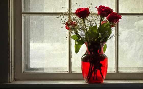 janela, rosas, flores
