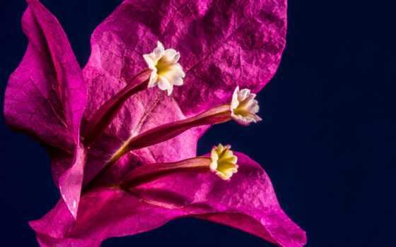 new, год, messages, сладкое, happy, wishes, reason, цветы, сделать,