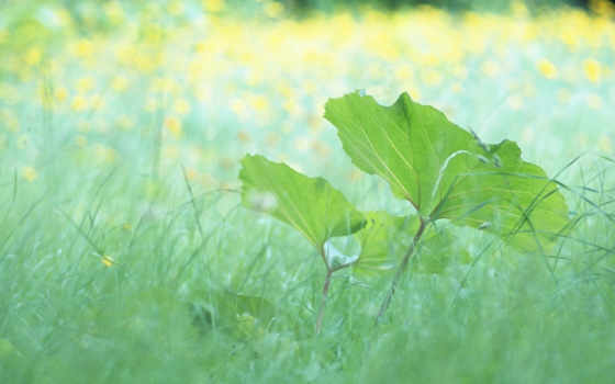 лето листики трава
