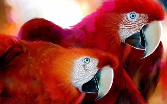 попугаи, красные, попугаев