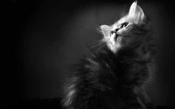 котенок, чёрно, white