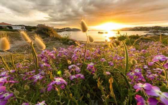 солнца, природа, rays, золотого, красивые, цветы, ray, страница, золотые,