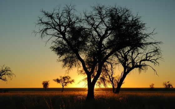 закат, вечер, дерево, природа, sun, ветки, tosca, dub, namibia, african,